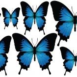 Farfalla3-tutte