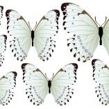 farfalle2-tutte